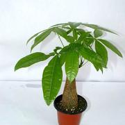 绿色盆栽植物