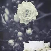白色花朵背景墙