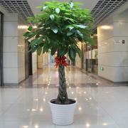 办公室盆栽