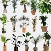 盆栽小型植物