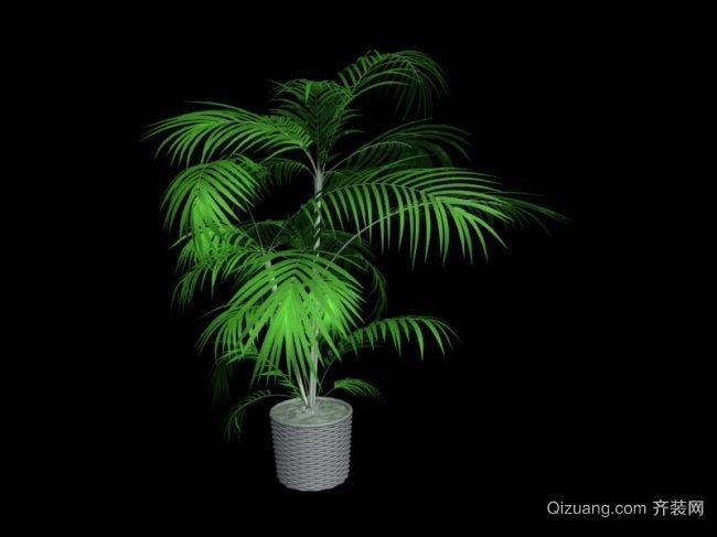 室内盆景植物图片大全