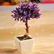 盆栽紫色植物