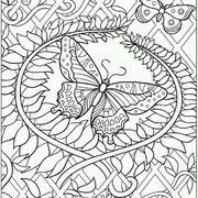 蝴蝶标本型装饰画