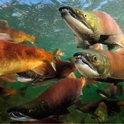 海底鱼类图片