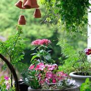 红色小型盆栽植物