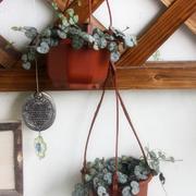 小型吊坠是家居盆栽