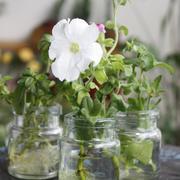 白色小型盆栽植物