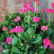 家居小型盆栽植物
