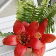五个花瓣的小型盆栽