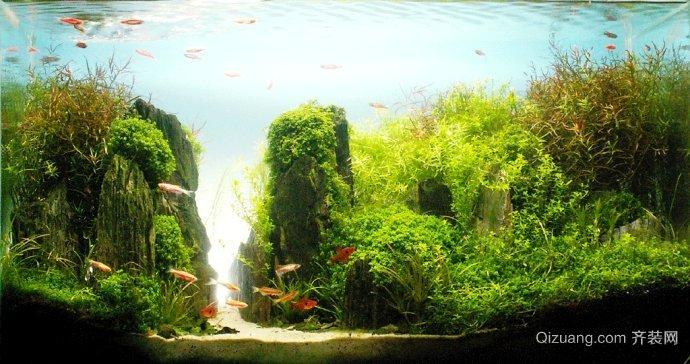 鱼缸造景精选图片系列