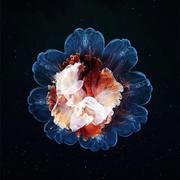花型海底生物图片