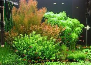 中式风格客厅鱼缸造景装修效果图