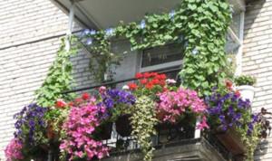 全新欧式家庭阳台花园装修效果图