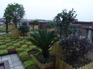 屋顶花园简约风格绿化装饰