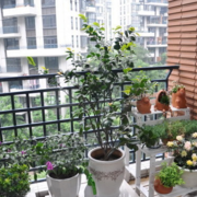 阳台铁艺护栏展示