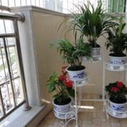 阳台铁艺盆栽架