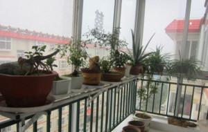 阳台精致小盆栽