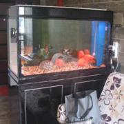 后现代风格玄关鱼缸装饰