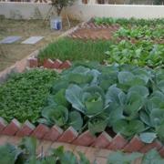 农村庭院小菜园装饰