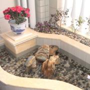 大气家庭入户花园装修设计