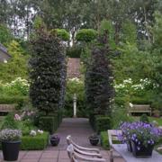 庭院设计整体图