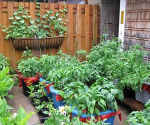 2015都市家庭阳台菜园装修效果图