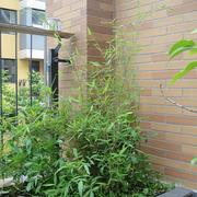 露台花园设计背景墙图