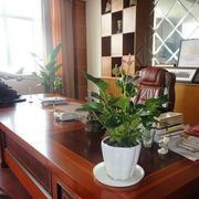 办公室室内盆栽装修整体图