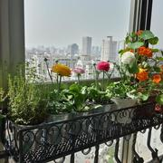 阳台花架装修实景图