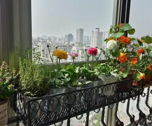 复式楼家庭阳台铁艺花架装修效果图