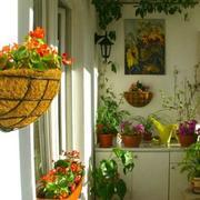 精美的阳台花架装修图