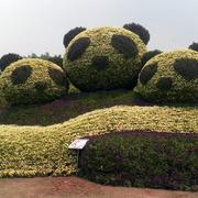 园艺打造的三个熊猫