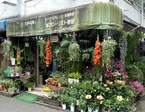 春意盎然的花店