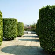 园艺景观欣赏