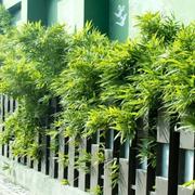 围墙绿化装修
