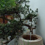 花园盆景图片展示