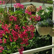 露台盆栽布置欣赏