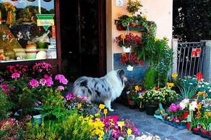 花店盆栽展示布置