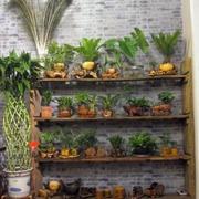 花店实木置物架