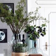 客厅盆栽图片展示