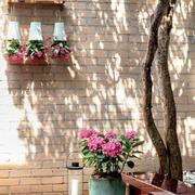 复式楼庭院盆栽布置