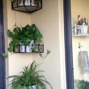 美观实用的阳台花架