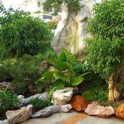 花园里的花草树木展示