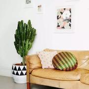 家居客厅盆栽放置