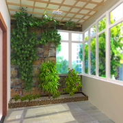 阳台绿色植物