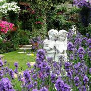 鲜花盛开的别墅花园图