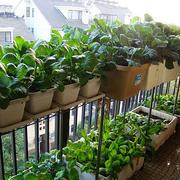 自然型菜园设计图片