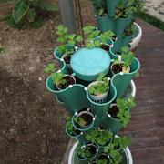 小型菜园设计图片