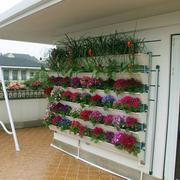 丰富多彩菜园设计图片