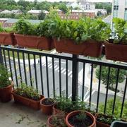 清新型菜园设计图片